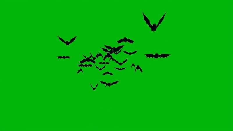 绿屏幕抠像蝙蝠视频素材