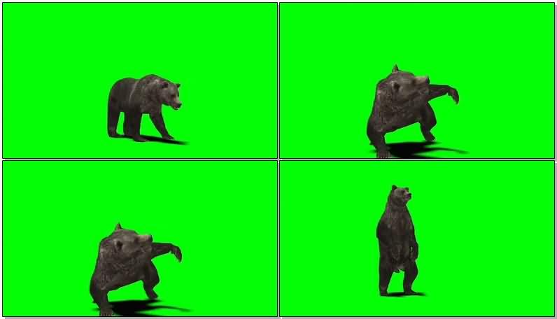 绿屏幕抠像黑熊.jpg
