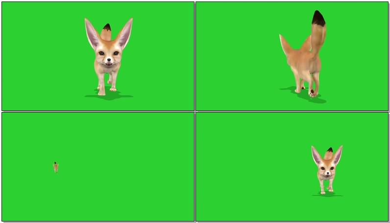 绿屏抠像视频素材狐狸