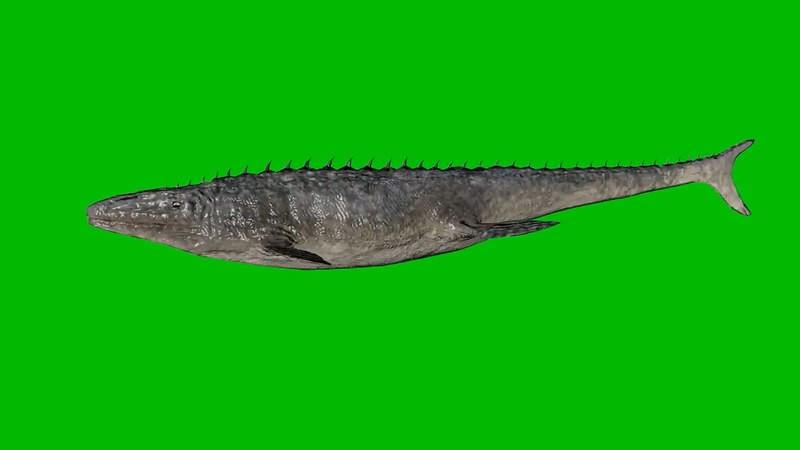 绿幕视频素材远古鳄鱼