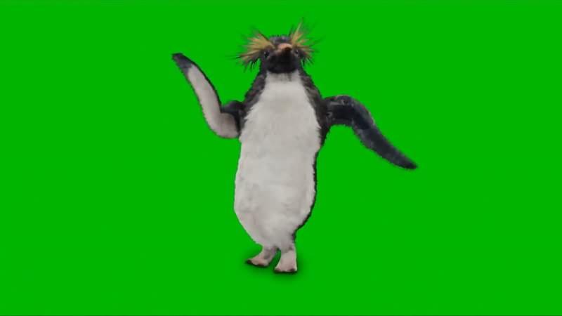 绿幕视频素材跳舞的企鹅
