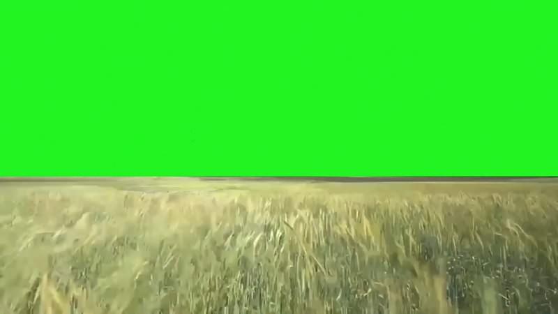 绿幕视频素材草地