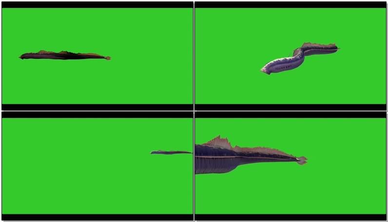 绿幕视频素材鳗鱼
