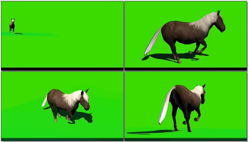 绿幕视频素材矮马