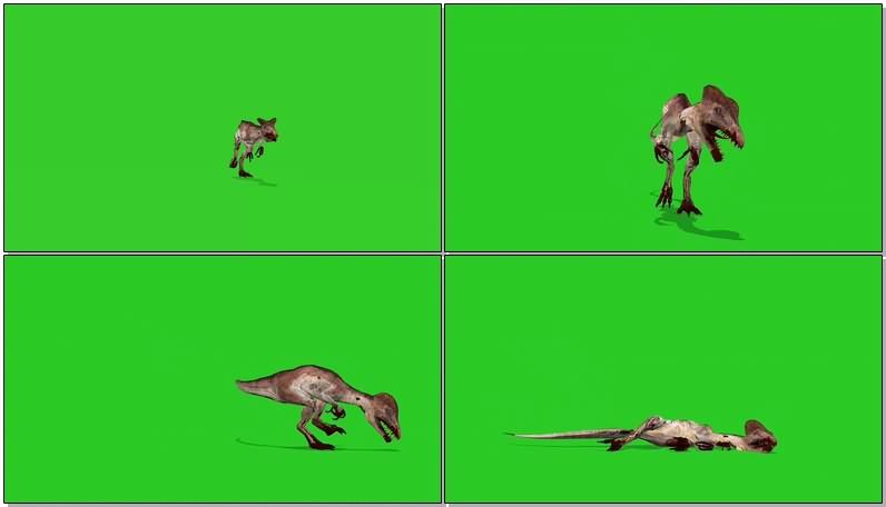 绿幕视频素材双冠龙