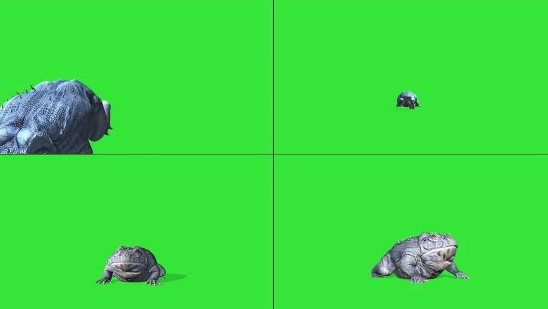 绿幕视频素材蛤蟆