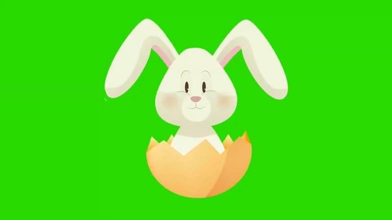 绿幕视频素材复活节兔子.jpg