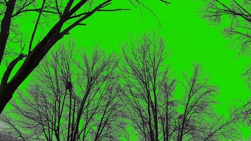 绿幕视频素材树木雪景