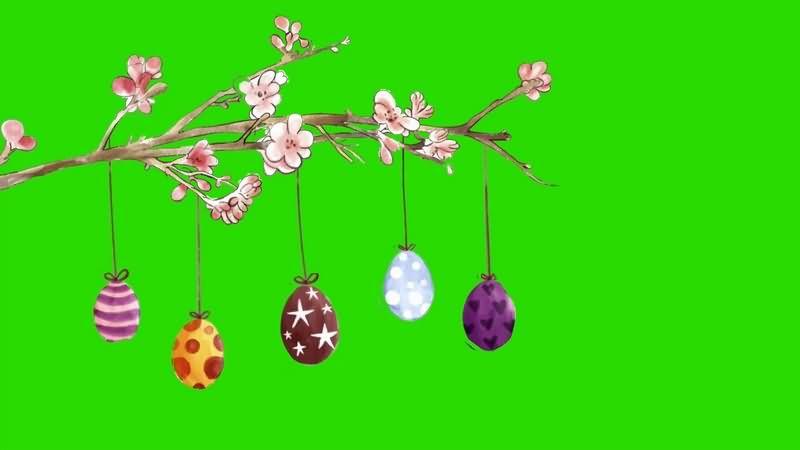绿幕视频素材樱花彩蛋