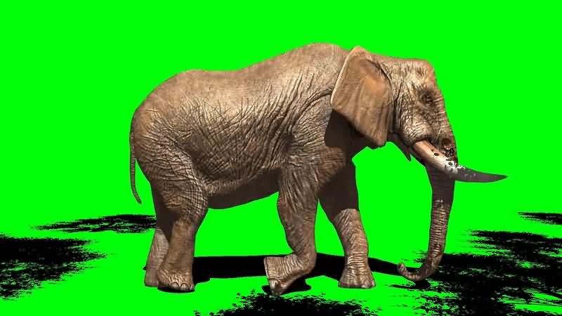 绿幕视频素材大象