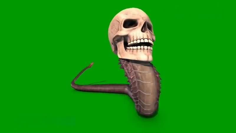 绿幕视频素材骷髅蛇