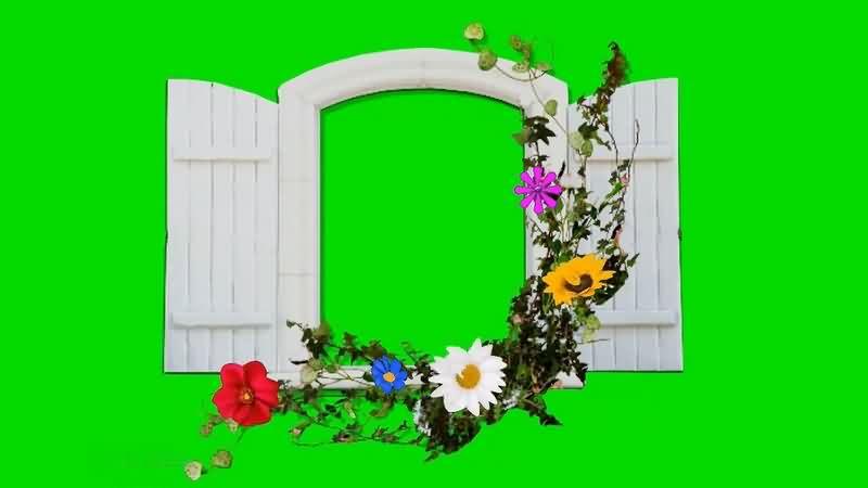 绿幕视频素材鲜花窗户