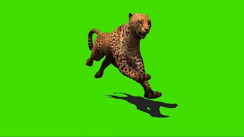 绿幕视频素材猎豹