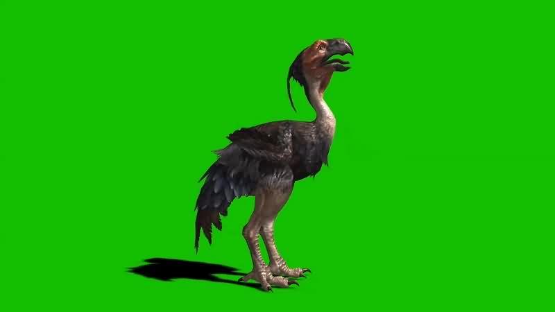 绿幕视频素材巨恐鸟