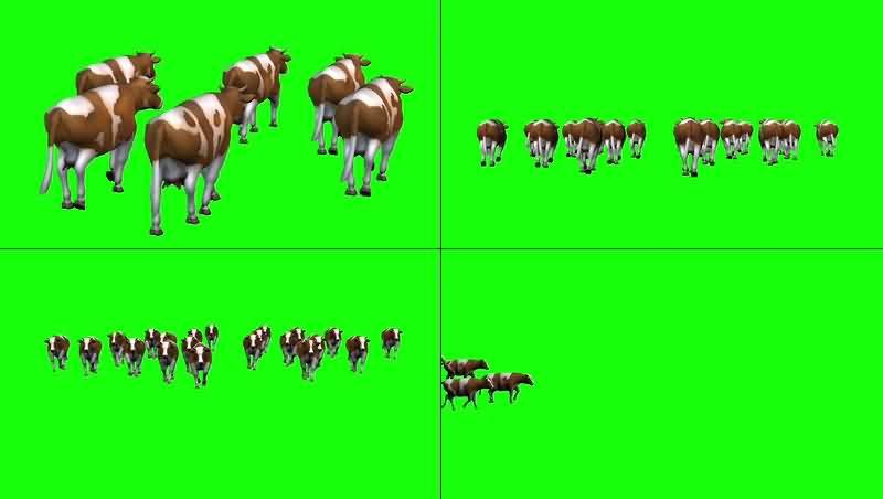 绿幕视频素材奶牛