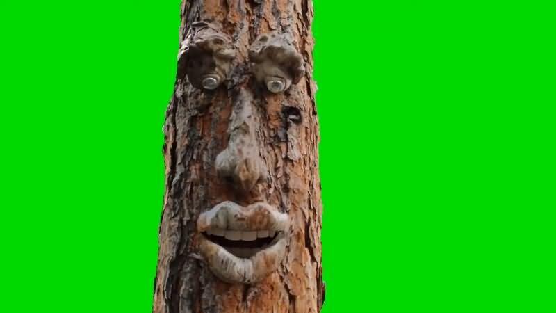 绿幕视频素材树精灵.jpg
