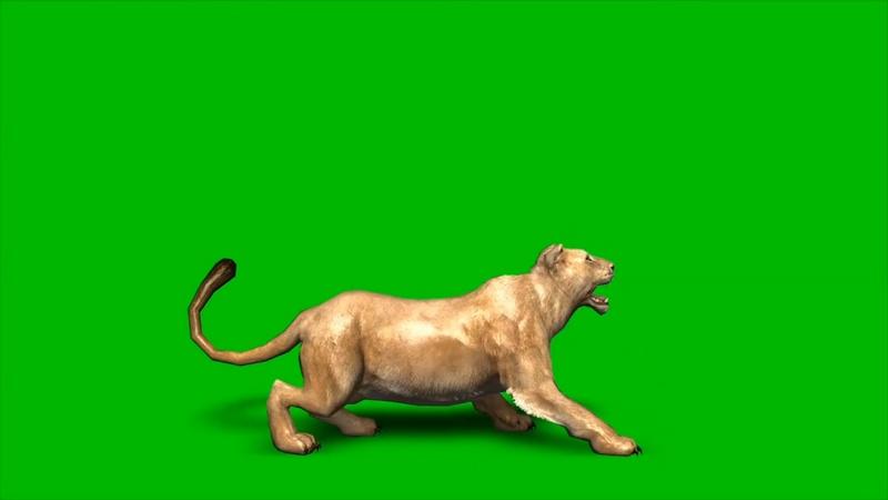 绿幕视频素材母狮