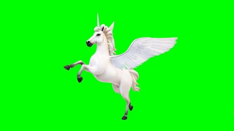 绿幕视频素材飞马