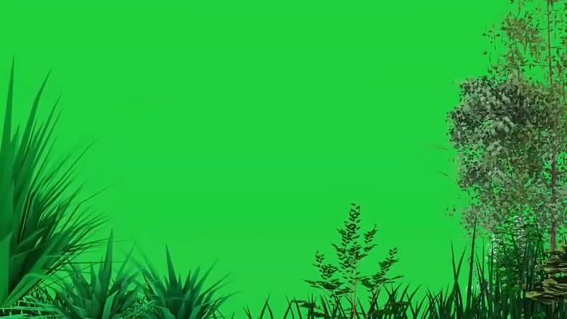 绿幕视频素材树林