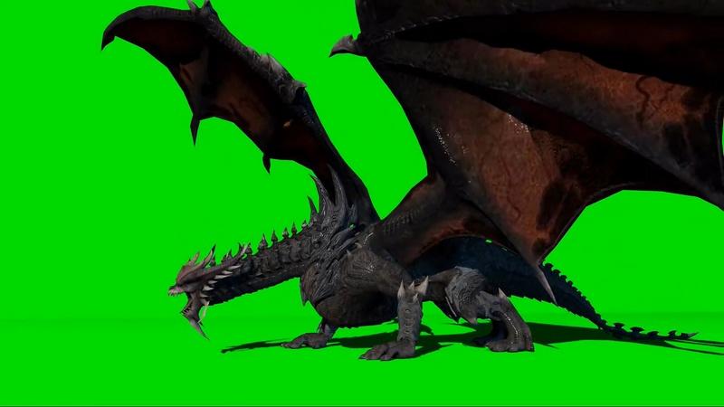 绿幕视频素材飞龙