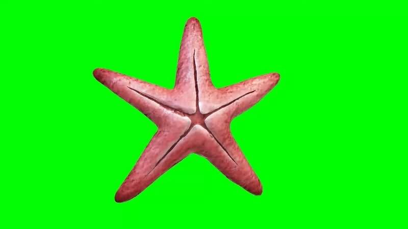 绿幕视频素材海星.jpg