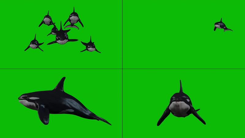 绿幕视频素材海豚