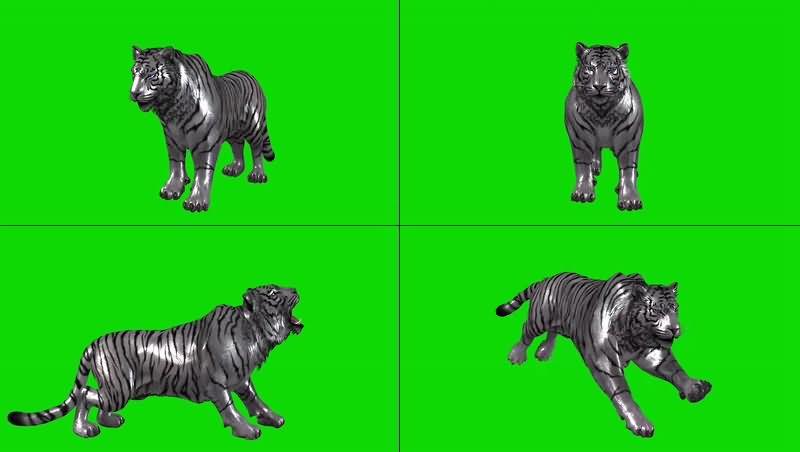 绿幕视频素材银虎