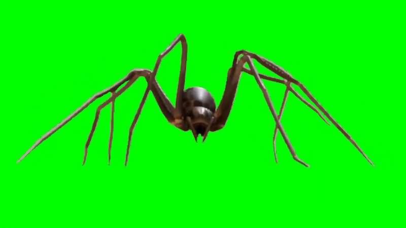 绿幕视频素材蜘蛛