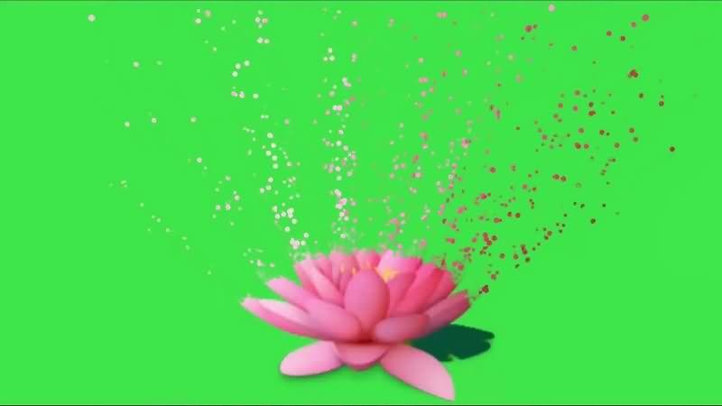 绿幕视频素材粉莲花
