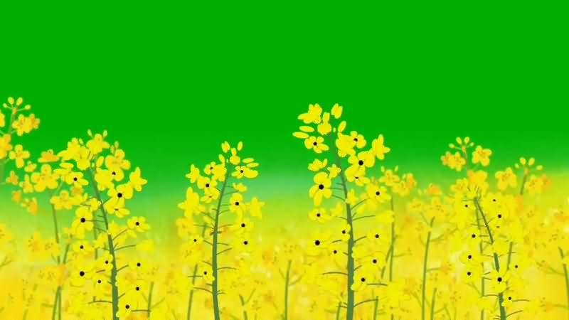 绿幕视频素材野花