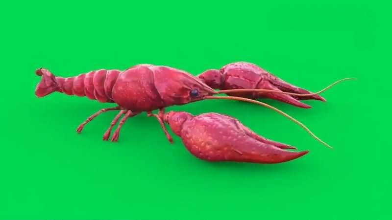 绿幕视频素材小龙虾