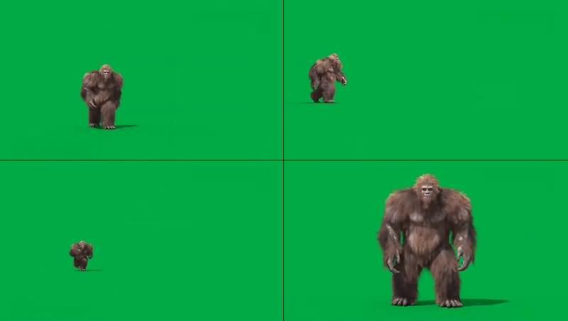 绿幕视频素材金刚巨猿