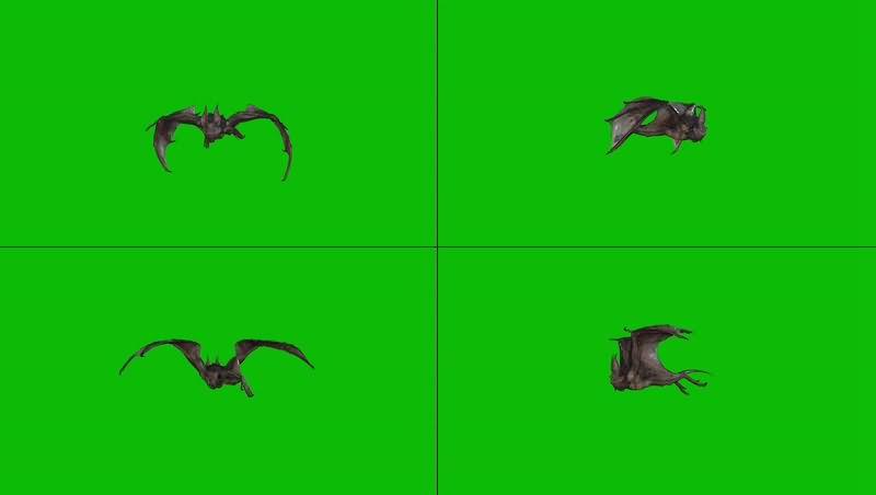 绿幕视频素材蝙蝠