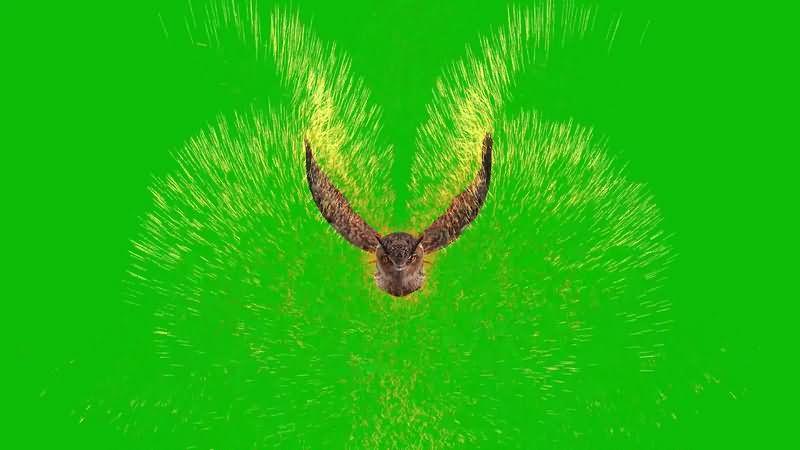 绿幕视频素材魔法猫头鹰