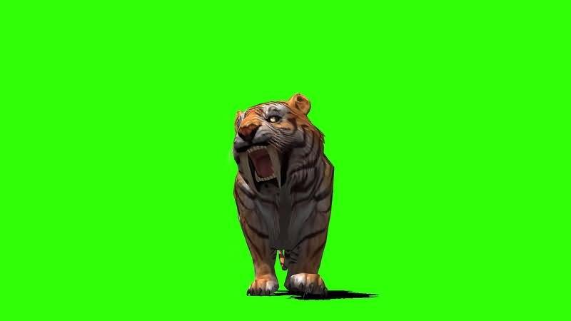 绿幕视频素材剑齿虎