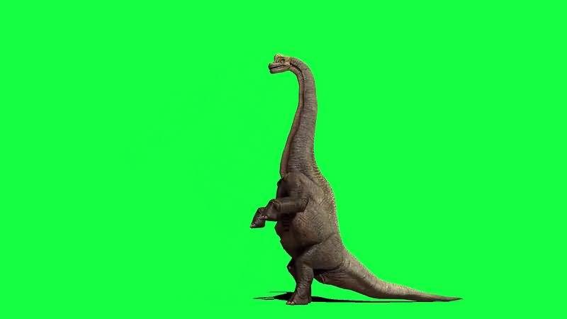 绿幕视频素材腕龙