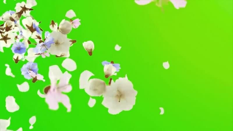 绿幕视频素材花朵.jpg