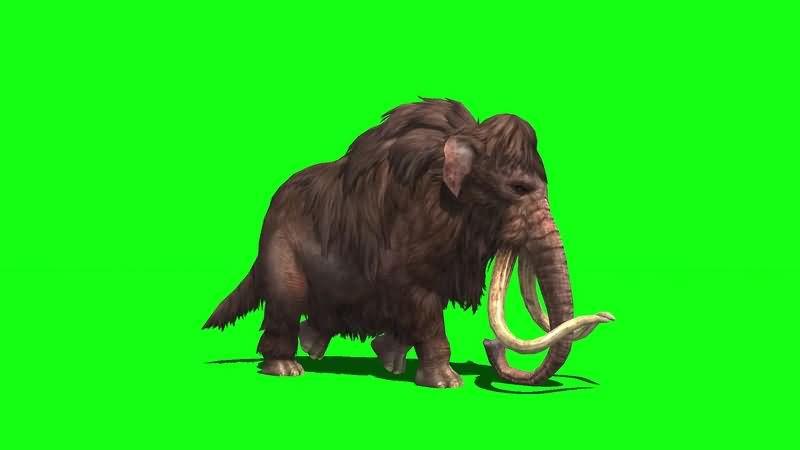 绿幕视频素材猛犸象