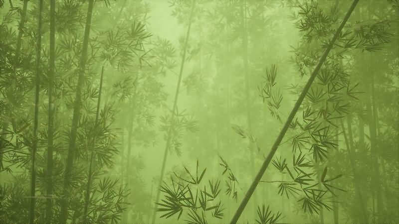 仙气缭绕的绿色竹林背景视频素材