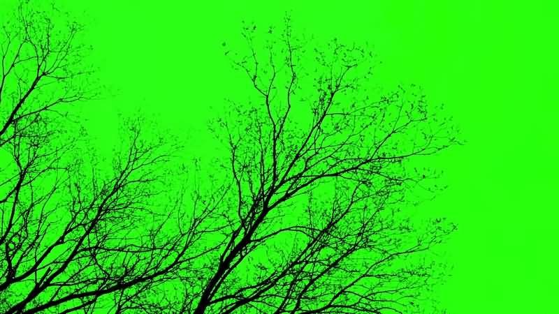 绿幕视频素材树枝.jpg