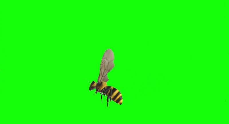 绿幕视频素材马蜂