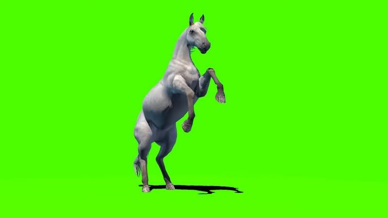 绿幕视频素材白马