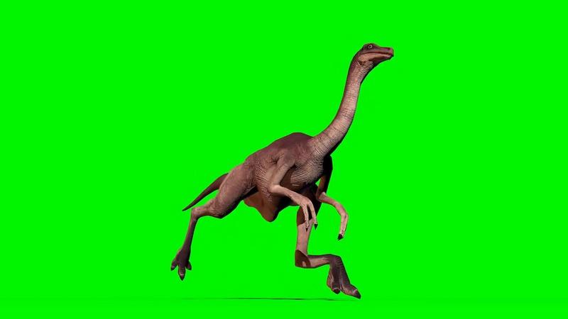 绿幕视频素材似鸡龙