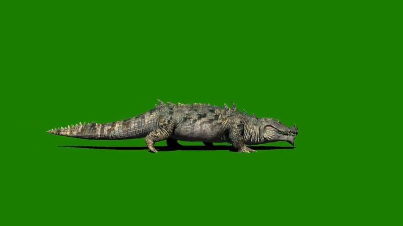 绿屏抠像爬行的尼罗河鳄鱼视频素材