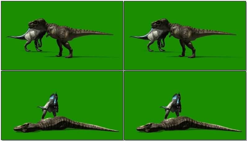 绿屏抠像两只打斗的恐龙视频素材