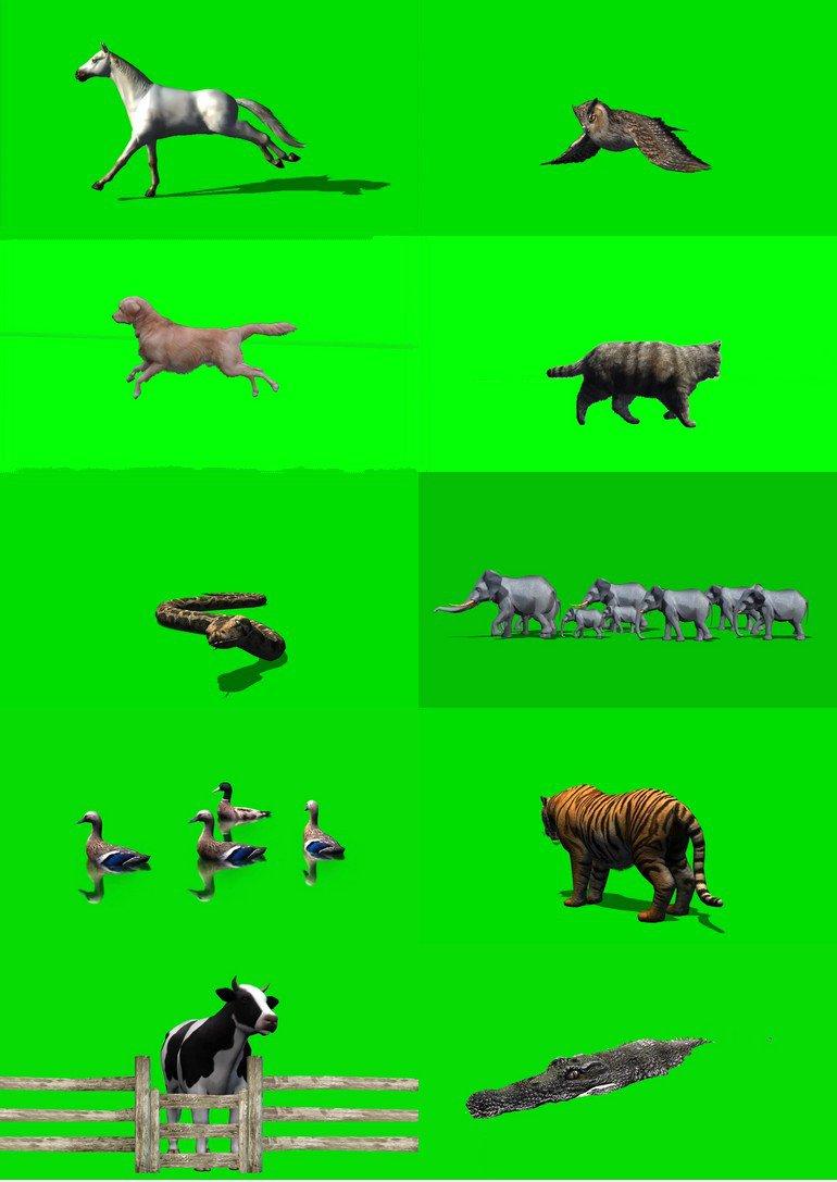 绿屏_绿布_绿幕动物|飞禽|走兽|鱼类|鸟类|生物视频素材打包100部第一套