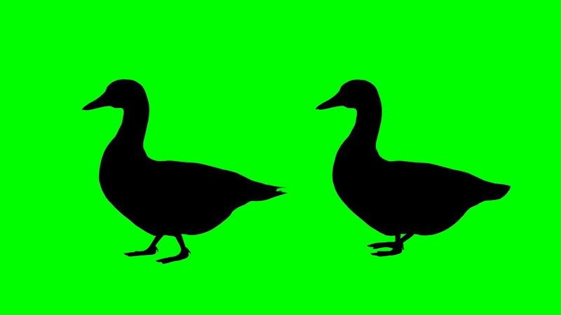 绿屏抠像鸭子剪影视频素材