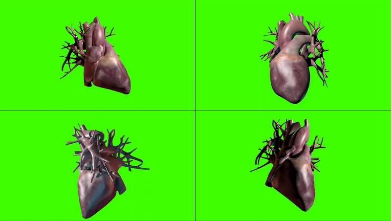 绿幕视频素材心脏