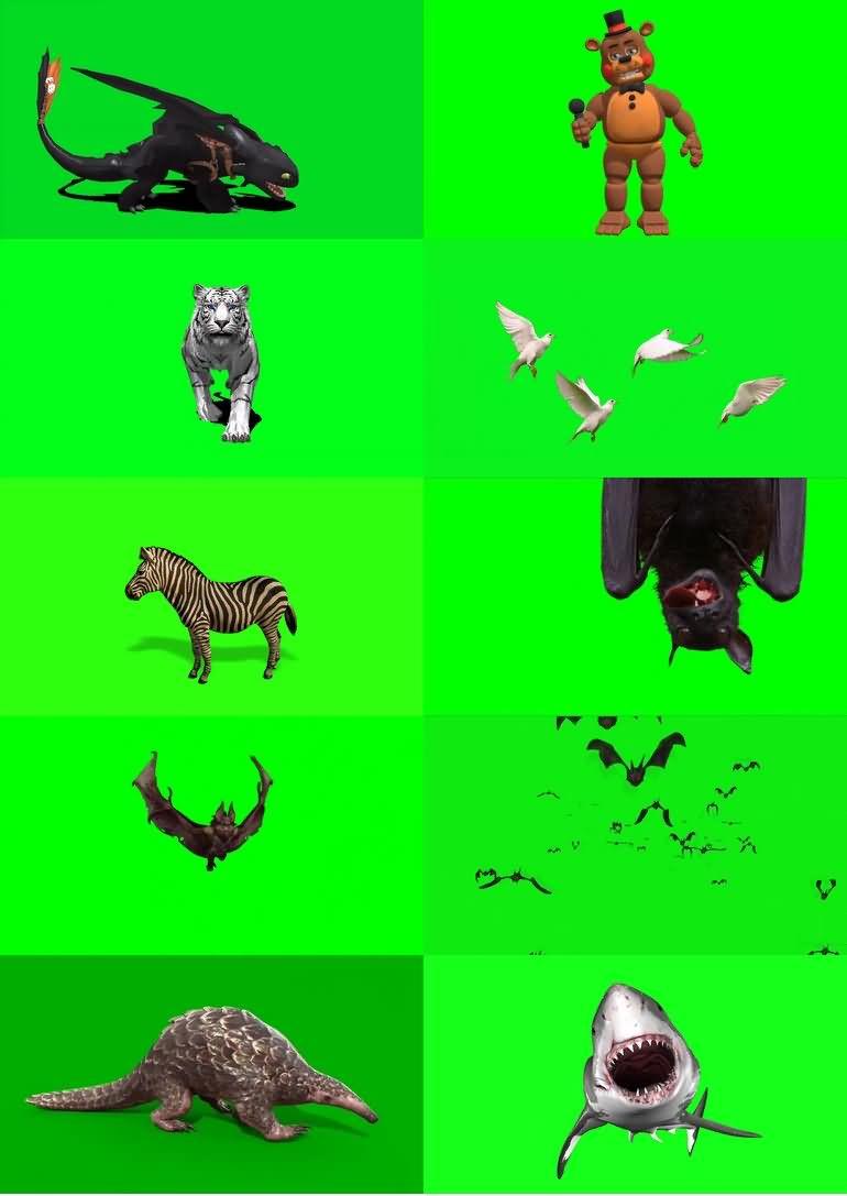 绿屏_绿布_绿幕动物|飞禽|走兽|鱼类|鸟类|生物视频素材打包100部第七套