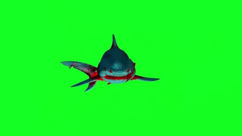 绿幕视频素材僵尸鲨鱼